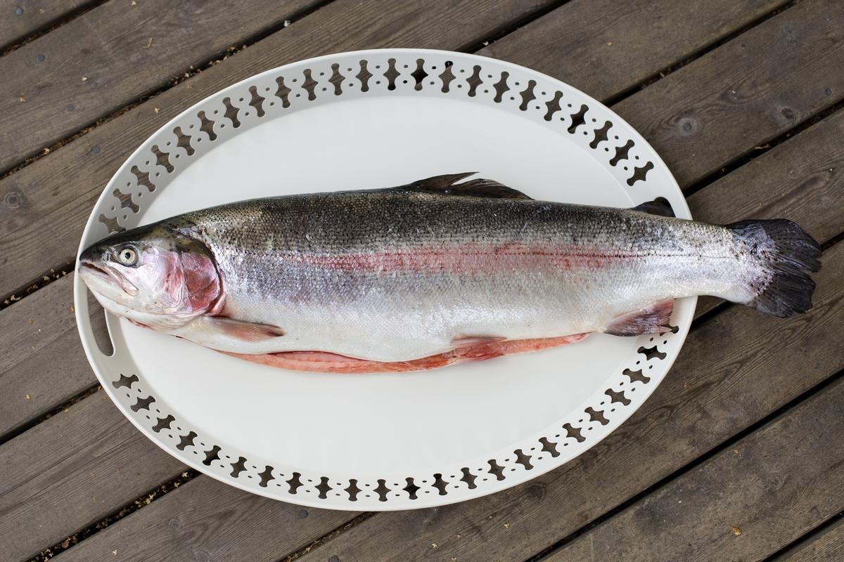 rainbow trout lavender dalarna sweden