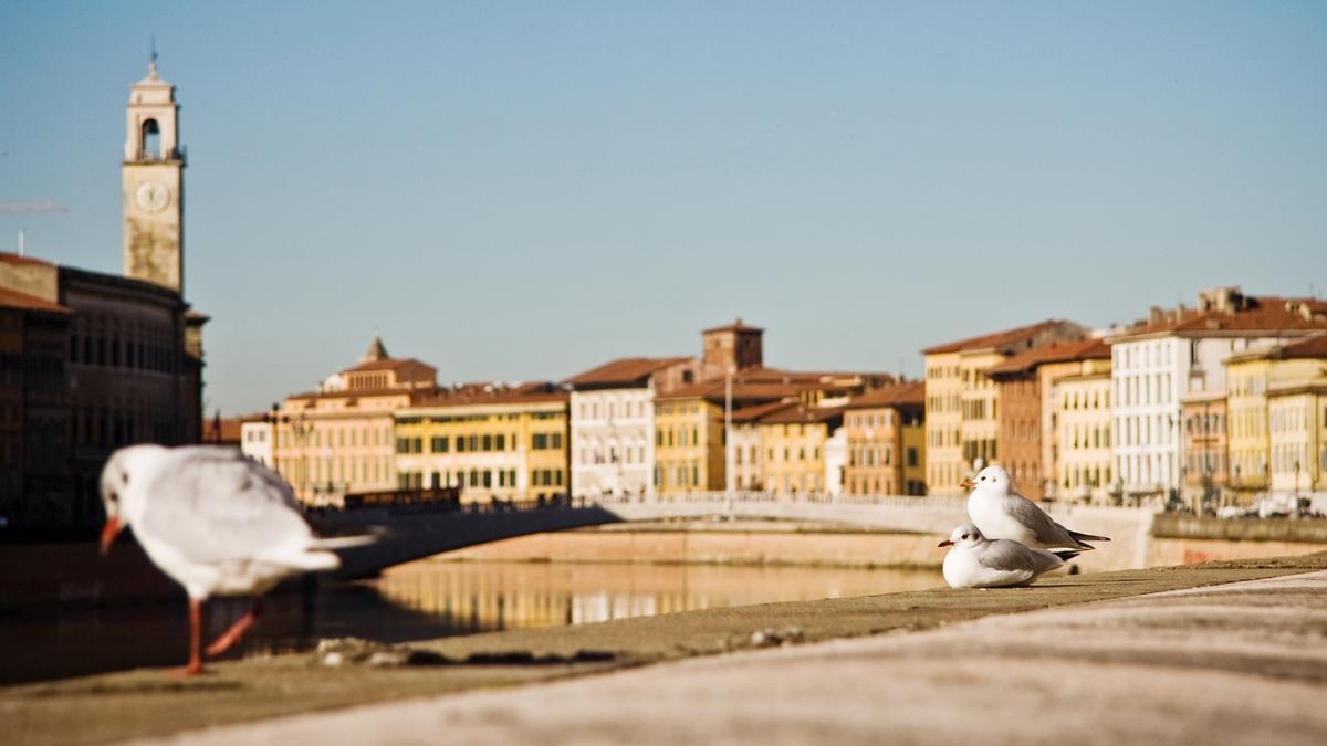 pisa lungarno tuscany